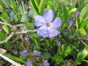 fireflower1